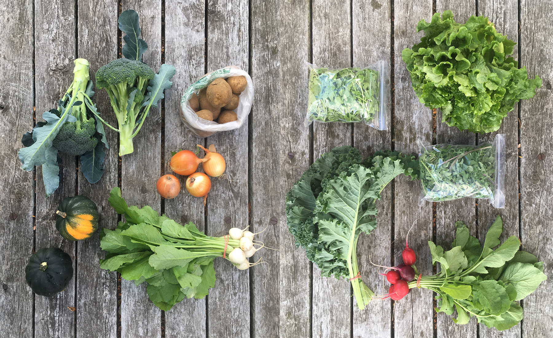 CSA weekly share example with greens, radishes, broccoli, onions, squash, potatoes