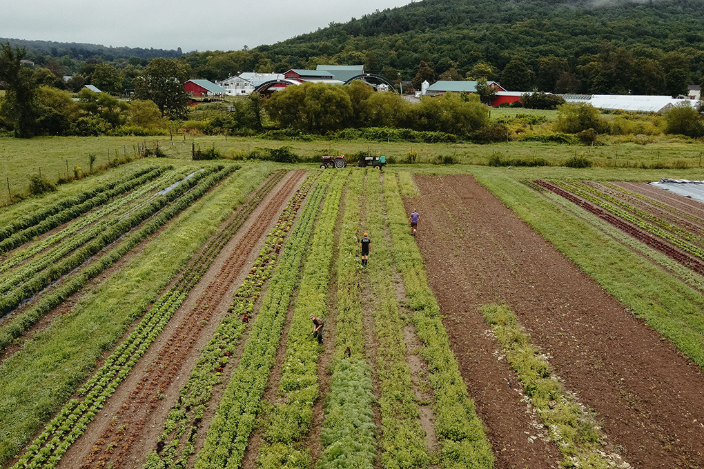 drone photo main vegetable field